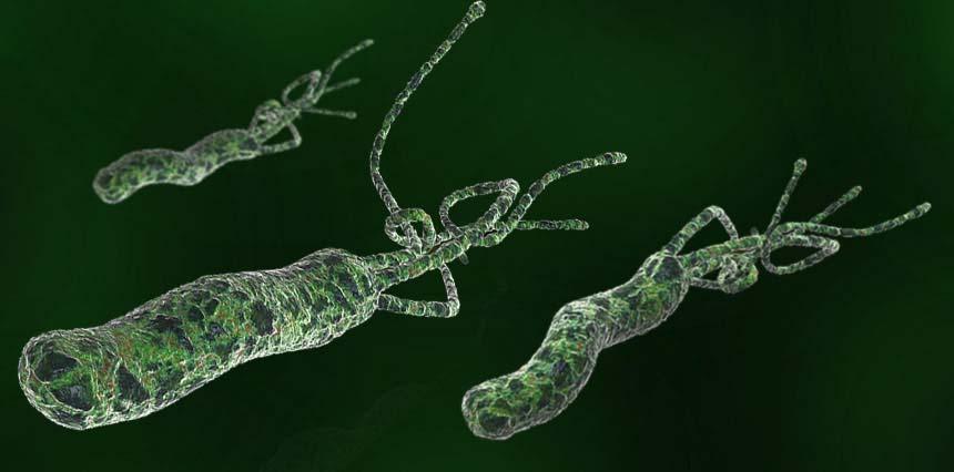 h pylori bacteria