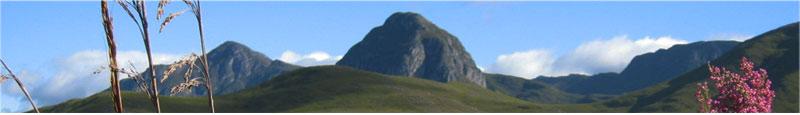 matula tea mountains