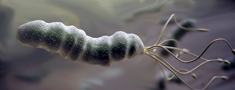 Helicobacter pylori bug
